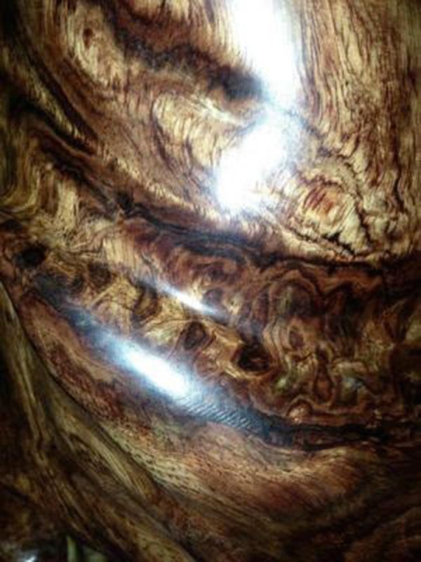 gỗ sưa Hải Nam